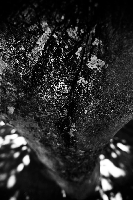 Dark Nature by Laurent Orseau #61