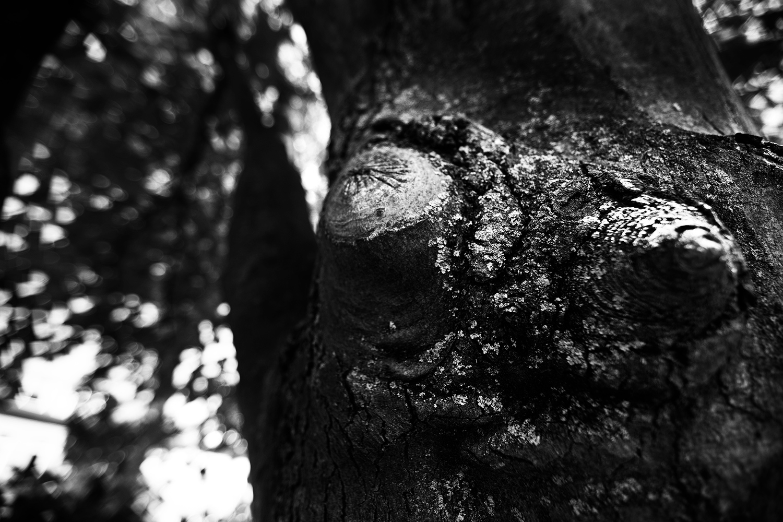 Dark Nature by Laurent Orseau #64