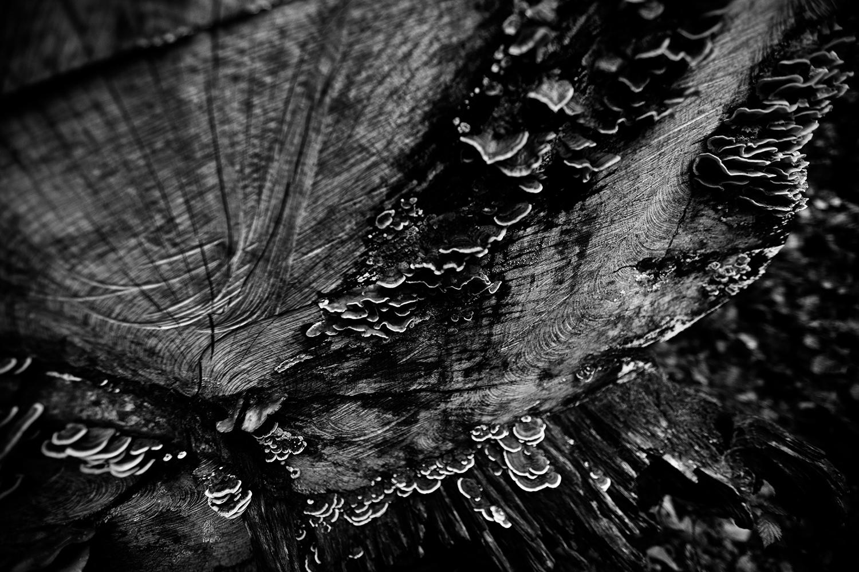 Dark Nature by Laurent Orseau #65