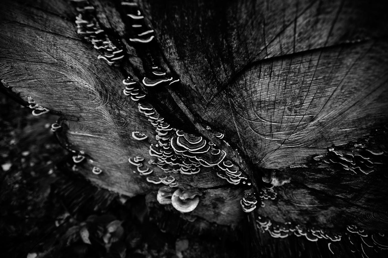 Dark Nature by Laurent Orseau #66