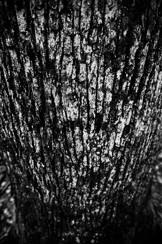 Dark Nature by Laurent Orseau #68