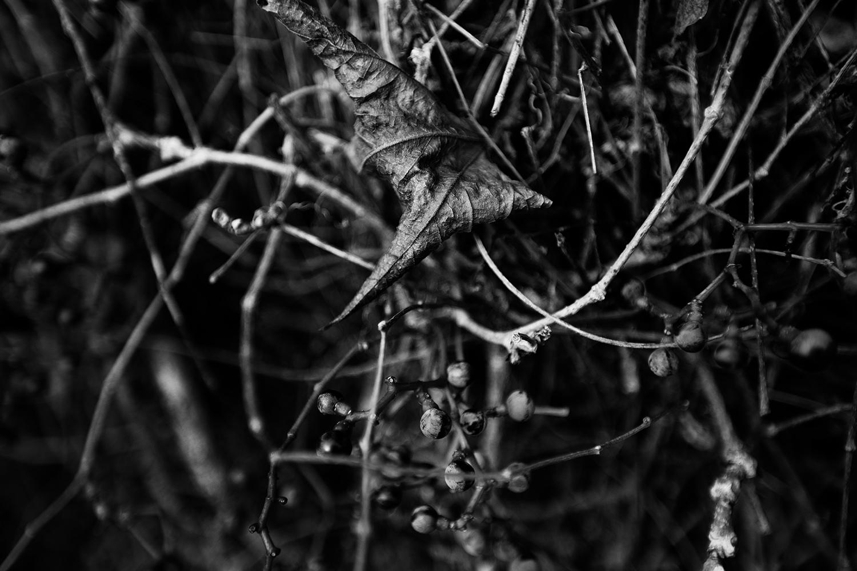 Dark Nature by Laurent Orseau #69