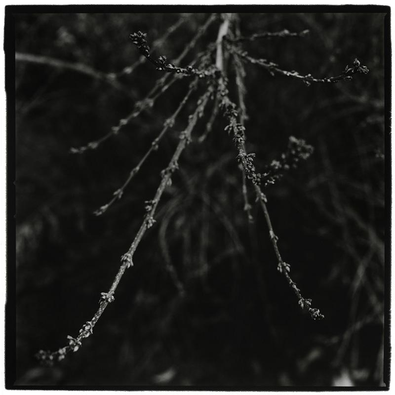Dark Nature by Laurent Orseau #7