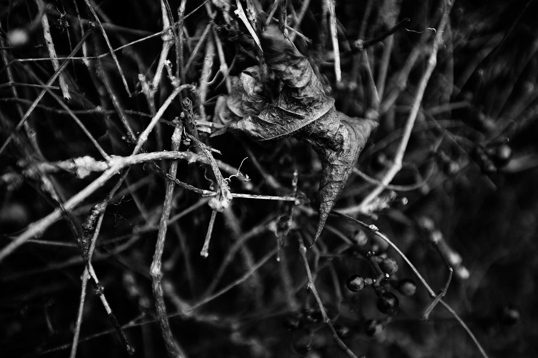 Dark Nature by Laurent Orseau #70
