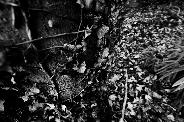 Dark Nature by Laurent Orseau #72