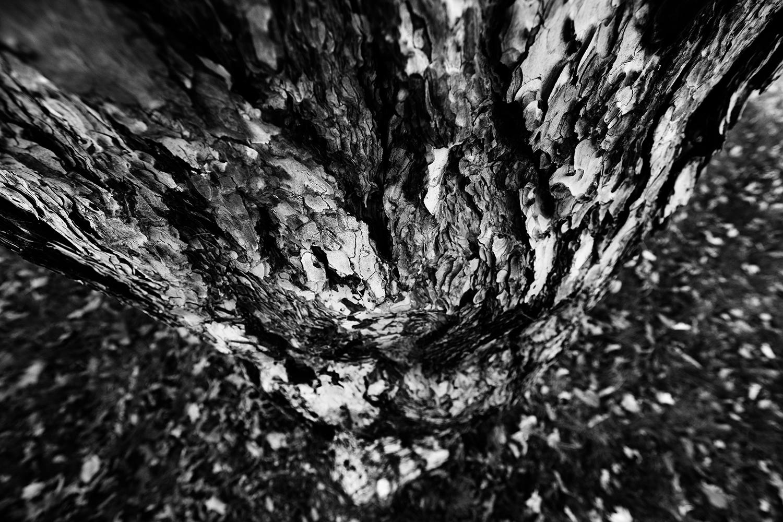 Dark Nature by Laurent Orseau #76