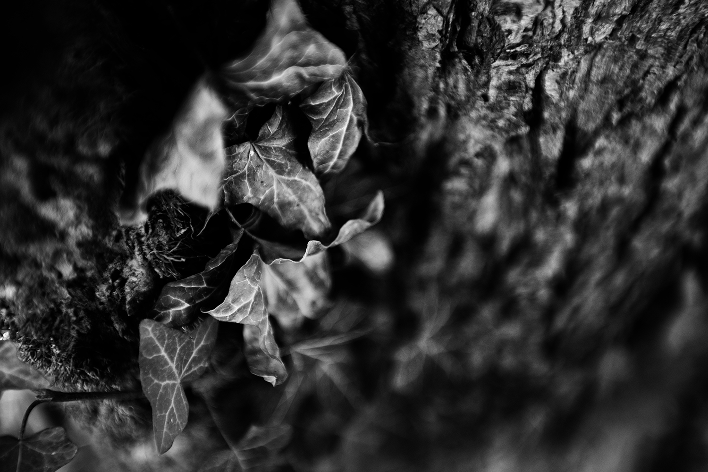 Dark Nature by Laurent Orseau #78