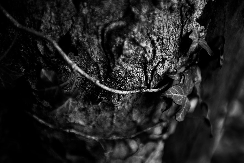 Dark Nature by Laurent Orseau #79