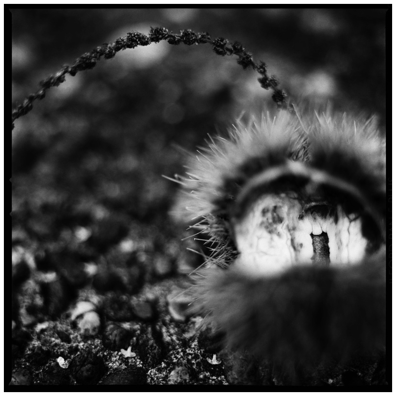 Dark Nature by Laurent Orseau #8