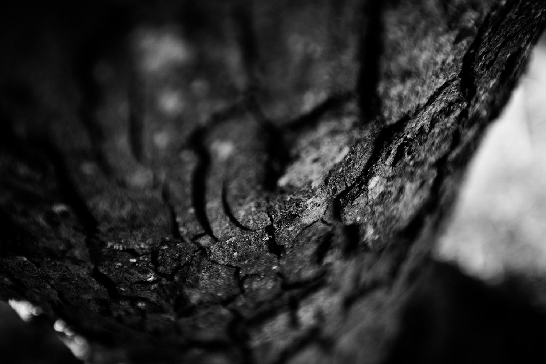 Dark Nature by Laurent Orseau #80