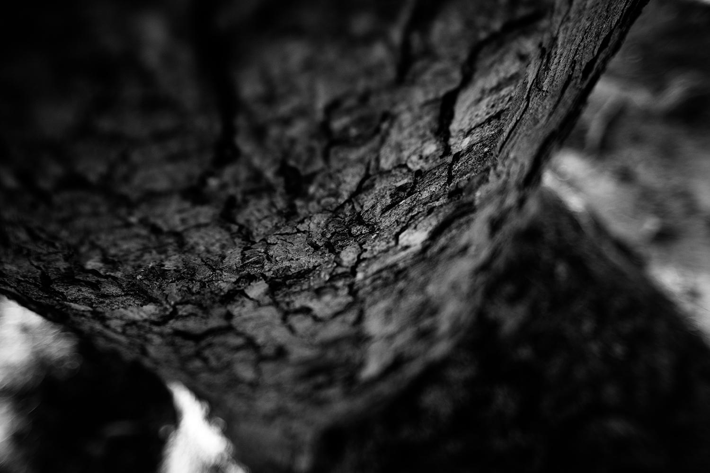 Dark Nature by Laurent Orseau #81