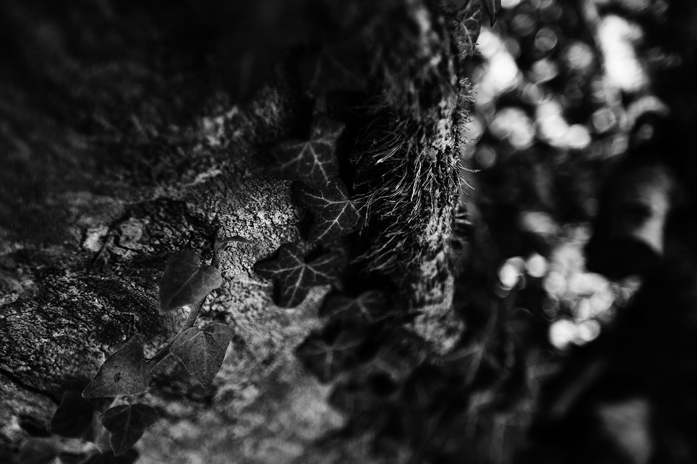 Dark Nature by Laurent Orseau #82