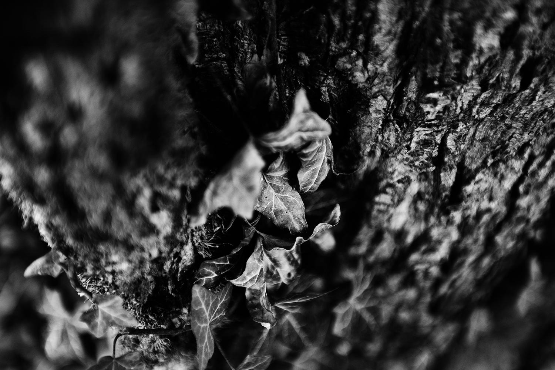 Dark Nature by Laurent Orseau #84