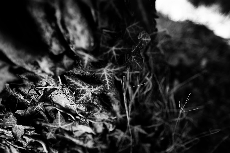 Dark Nature by Laurent Orseau #85