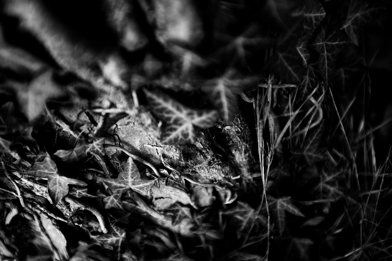 Dark Nature by Laurent Orseau #86
