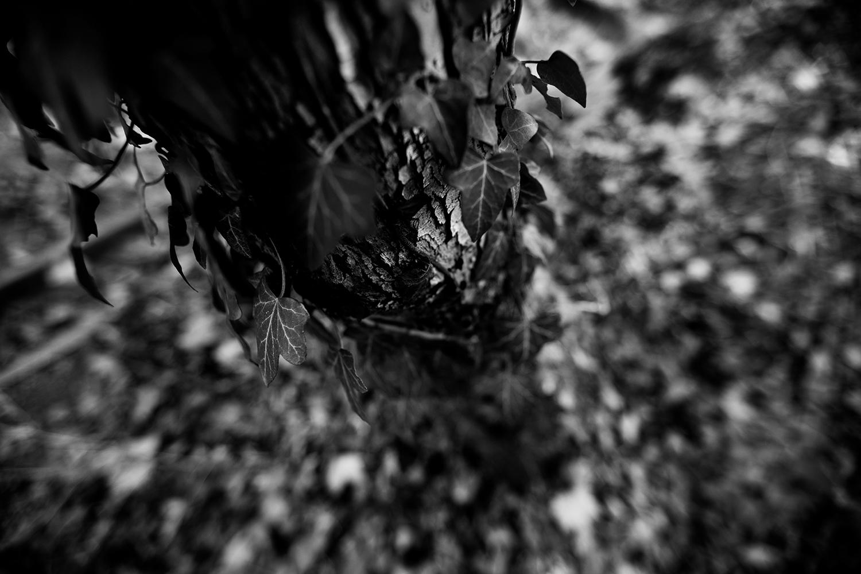 Dark Nature by Laurent Orseau #87