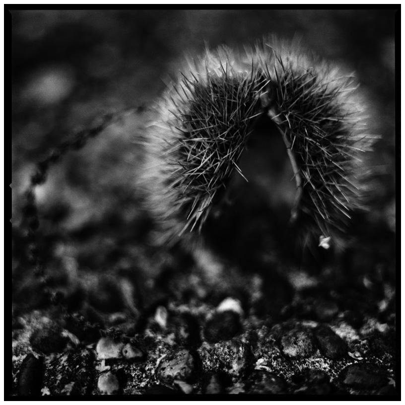 Dark Nature by Laurent Orseau #9