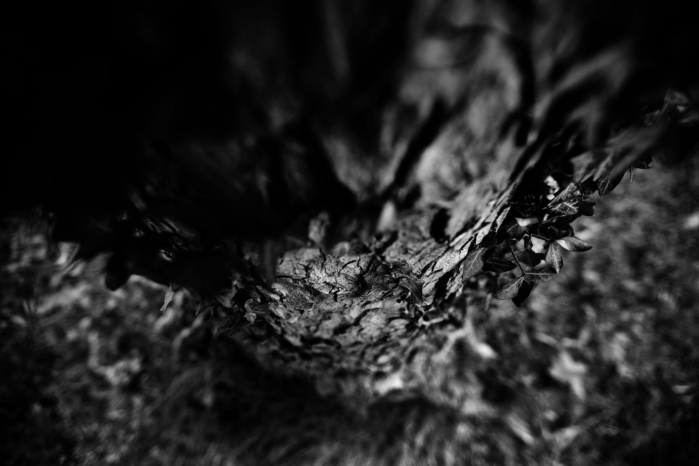 Dark Nature by Laurent Orseau #92