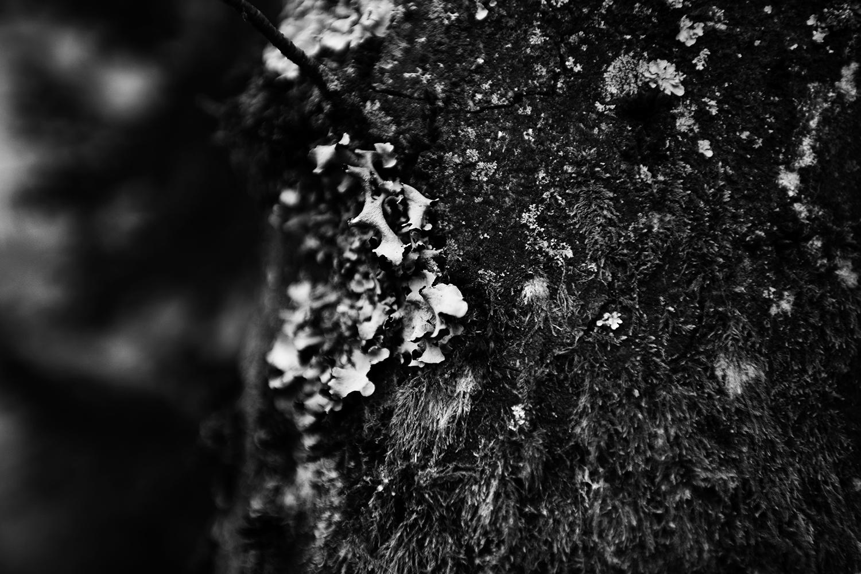 Dark Nature by Laurent Orseau #93