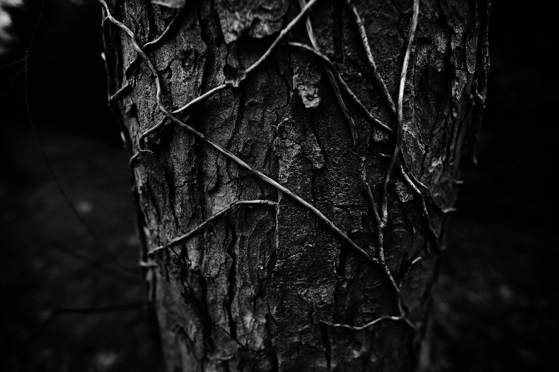 Dark Nature by Laurent Orseau #95