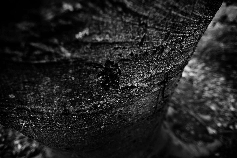 Dark Nature by Laurent Orseau #96