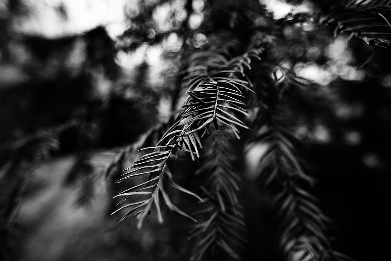 Dark Nature by Laurent Orseau #98
