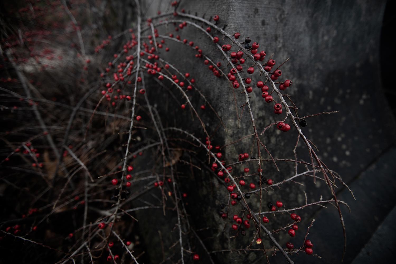 Dieweg Cemetery by Laurent Orseau #13