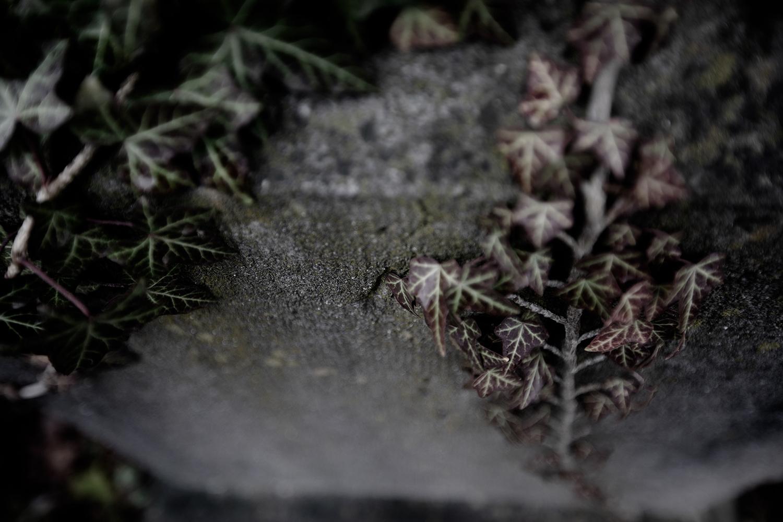 Dieweg Cemetery by Laurent Orseau #16