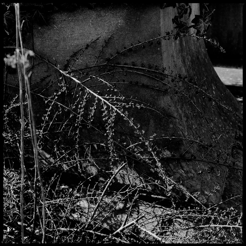 Dieweg Cemetery by Laurent Orseau #50