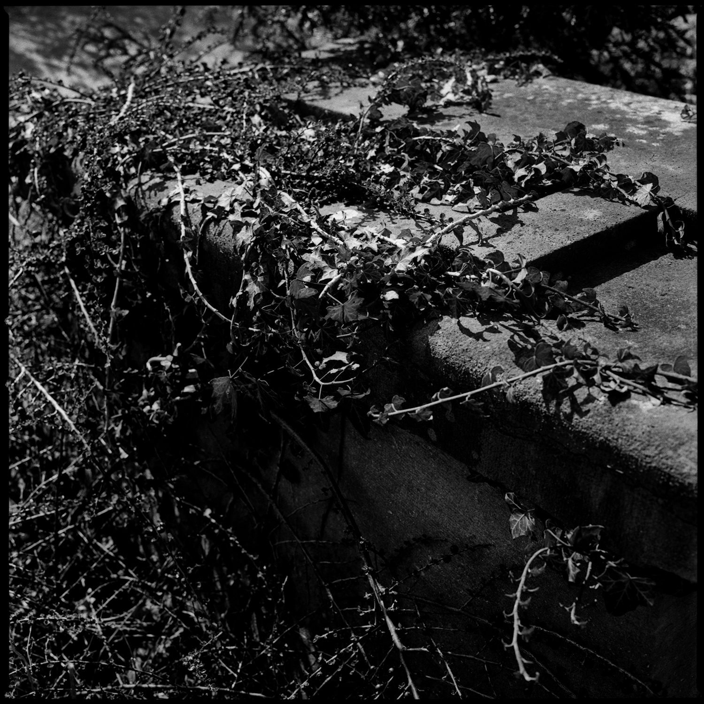Dieweg Cemetery by Laurent Orseau #53