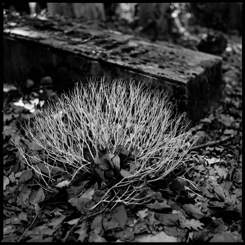 Dieweg Cemetery by Laurent Orseau #59