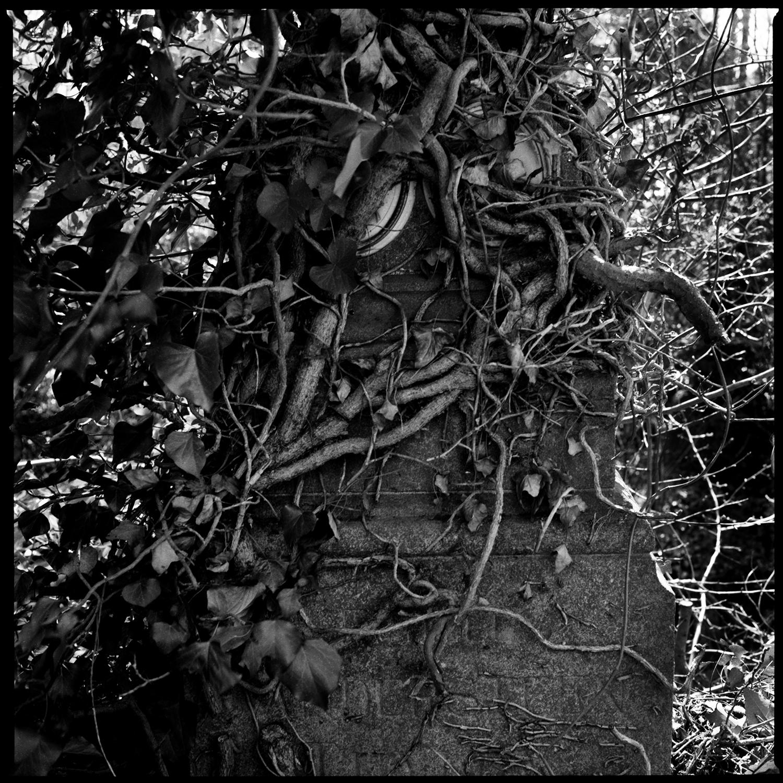 Dieweg Cemetery by Laurent Orseau #66