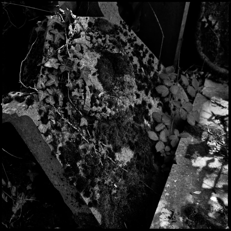 Dieweg Cemetery by Laurent Orseau #68