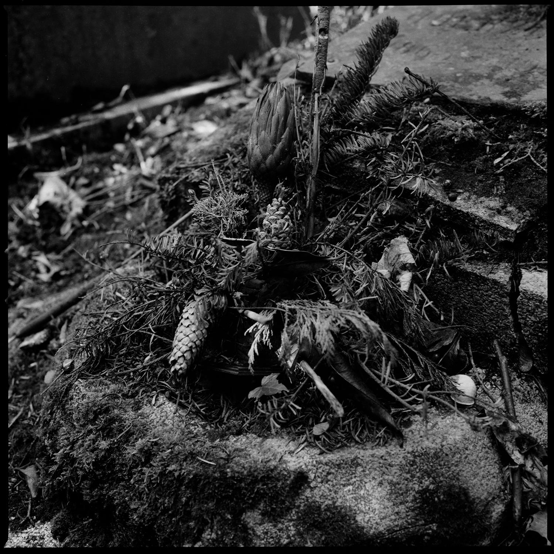 Dieweg Cemetery by Laurent Orseau #69