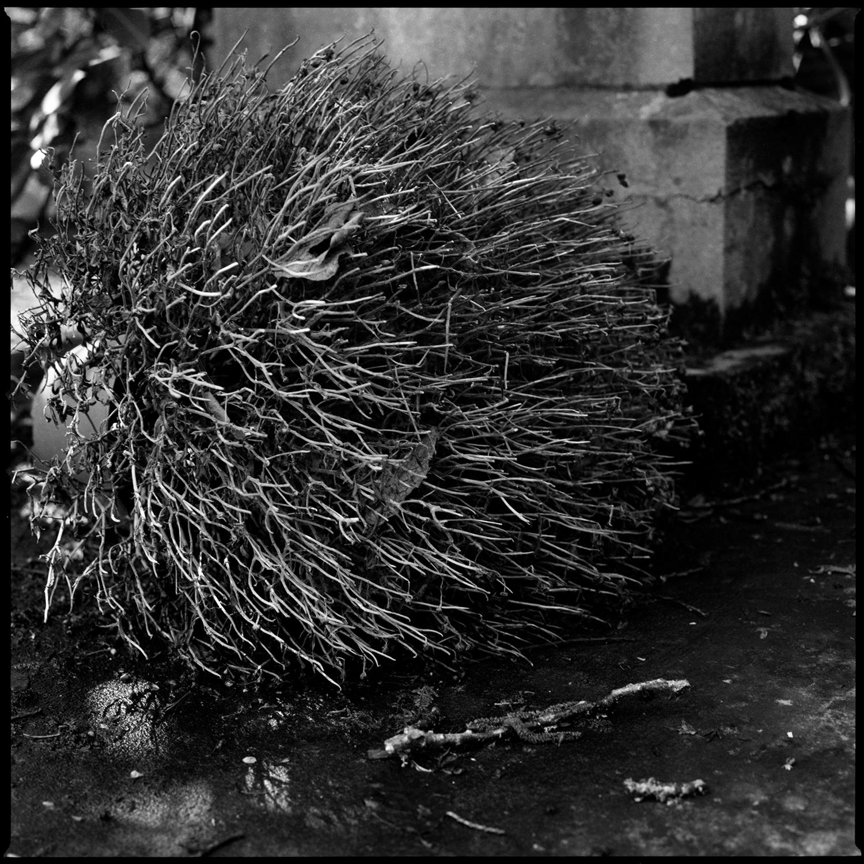 Dieweg Cemetery by Laurent Orseau #70