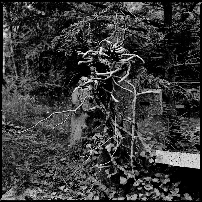 Dieweg Cemetery by Laurent Orseau #77