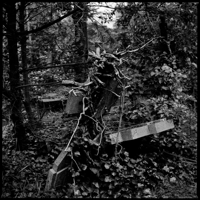 Dieweg Cemetery by Laurent Orseau #78