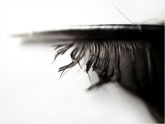 Raven's feather