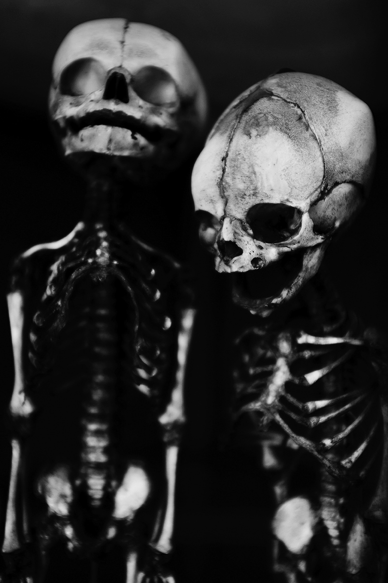Foetal Skeletons by Laurent Orseau #12