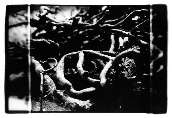Trees, Plants, Flowers... by Laurent Orseau #10