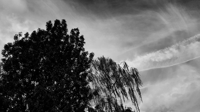 Trees, Plants, Flowers... by Laurent Orseau #106