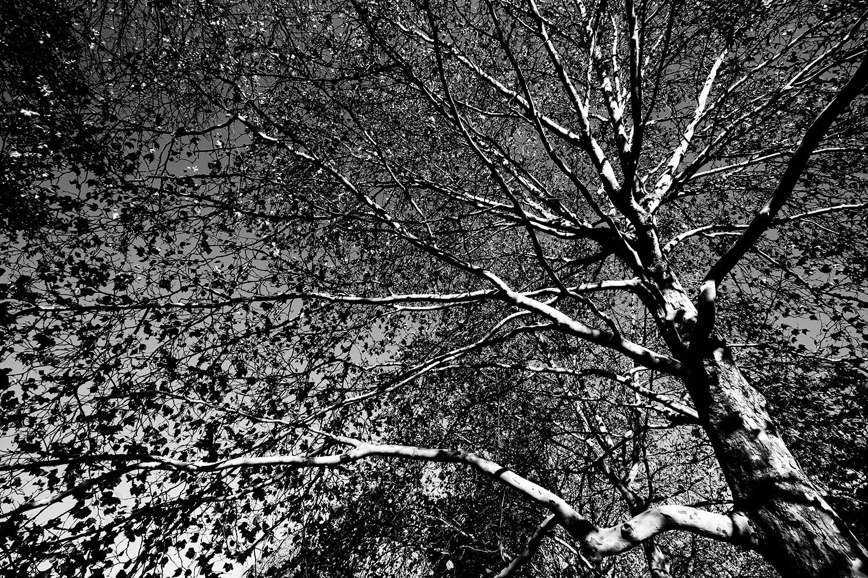 Trees, Plants, Flowers... by Laurent Orseau #107