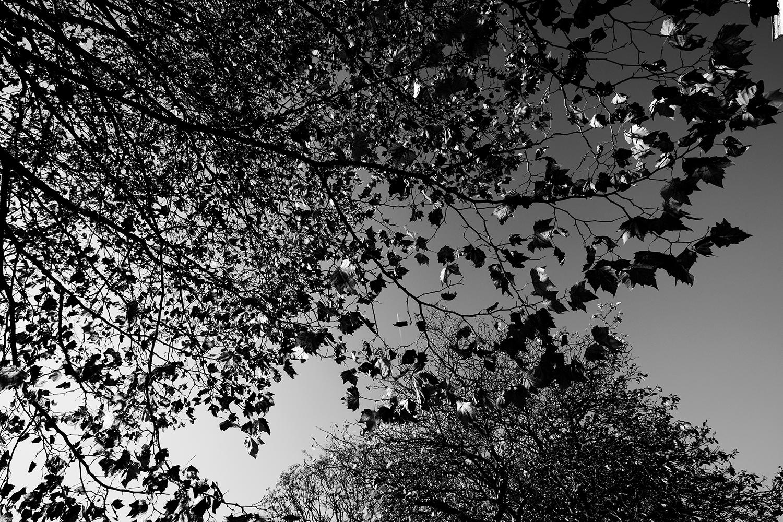 Trees, Plants, Flowers... by Laurent Orseau #108