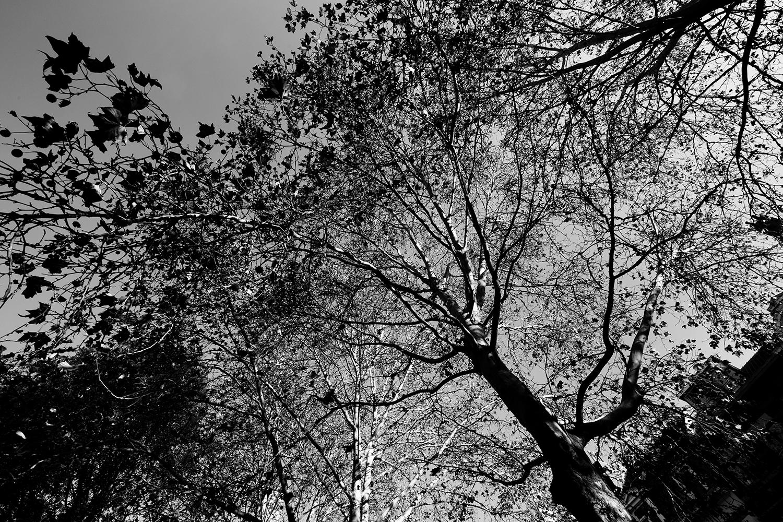 Trees, Plants, Flowers... by Laurent Orseau #109