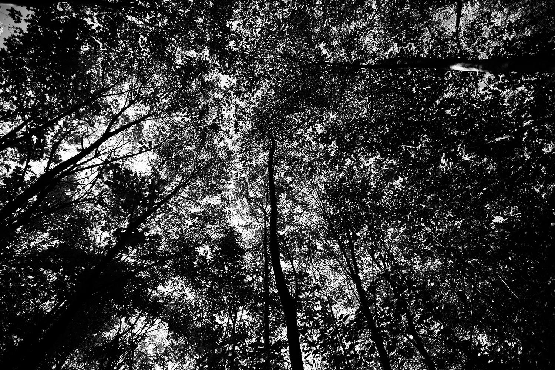 Trees, Plants, Flowers... by Laurent Orseau #110