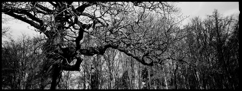 Trees, Plants, Flowers... by Laurent Orseau #111