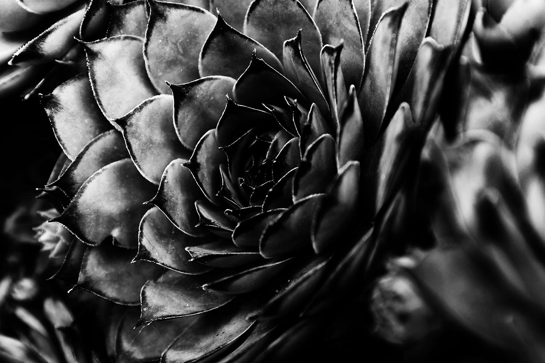 Trees, Plants, Flowers... by Laurent Orseau #115