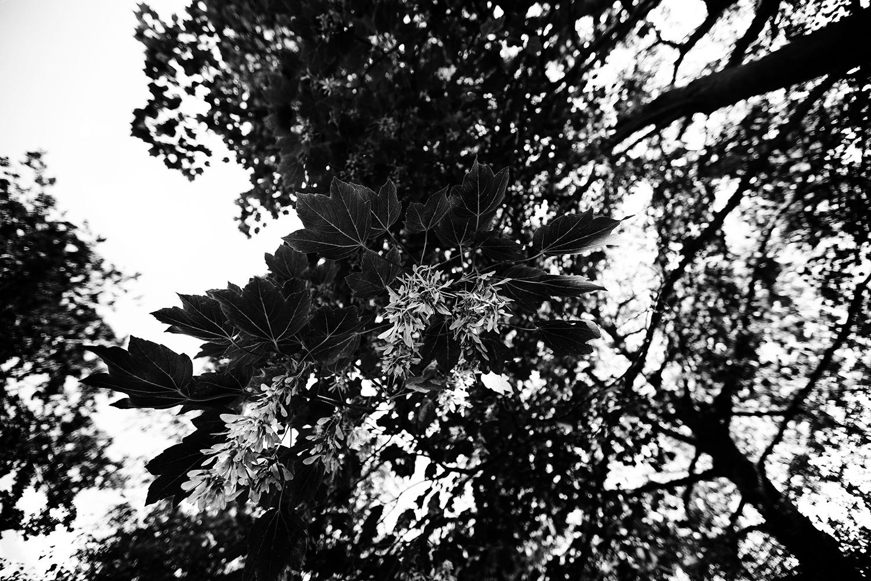Trees, Plants, Flowers... by Laurent Orseau #117