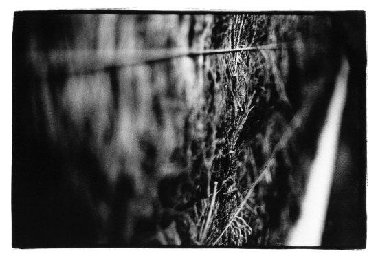 Trees, Plants, Flowers... by Laurent Orseau #12