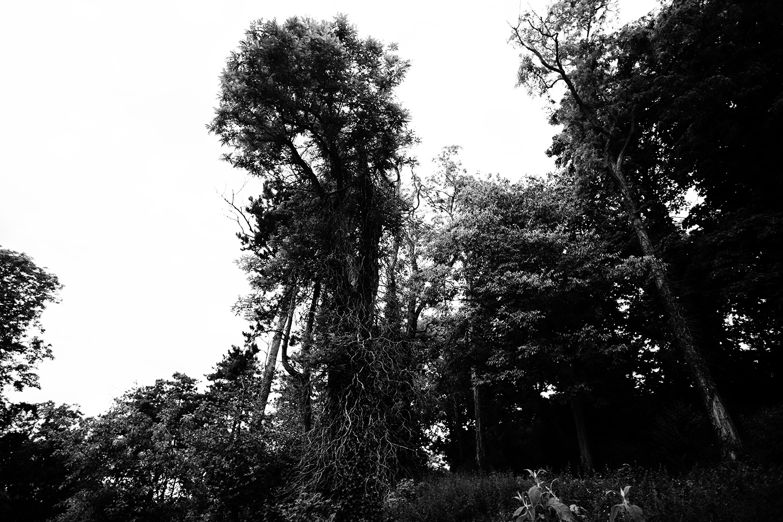 Trees, Plants, Flowers... by Laurent Orseau #120